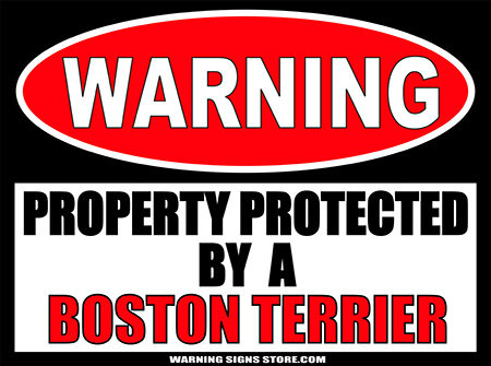 BOSTON TERRIER PROPERTY PROTECTED BY WARNING SIGN